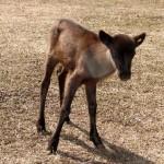 Rudolph's son